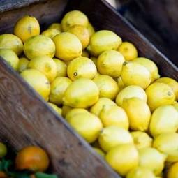 Glaces Sorbet citron