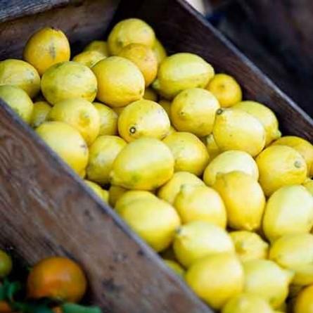 Glaces artisanales Sorbet citron