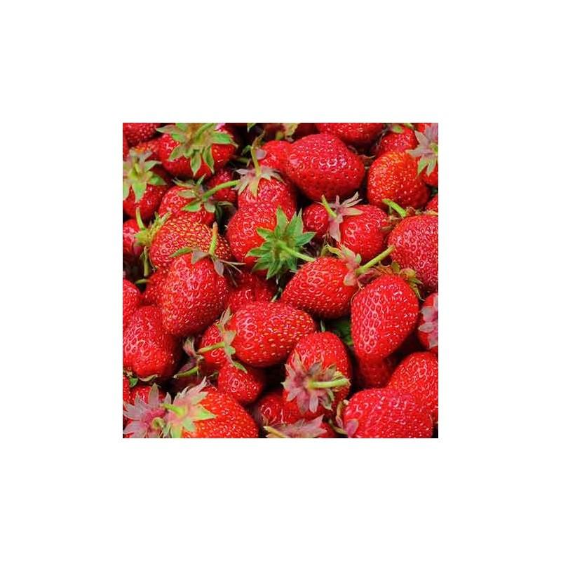 Glaces Sorbet fraise