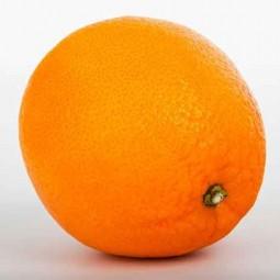 Sorbet Orange sanguine